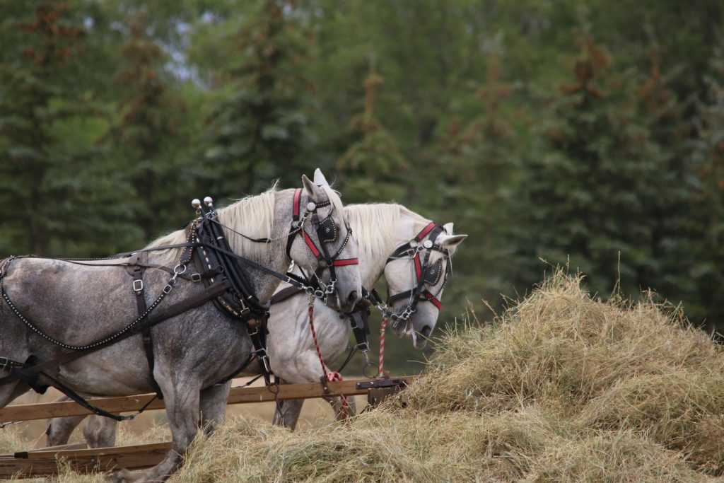 horses-3092773_1920